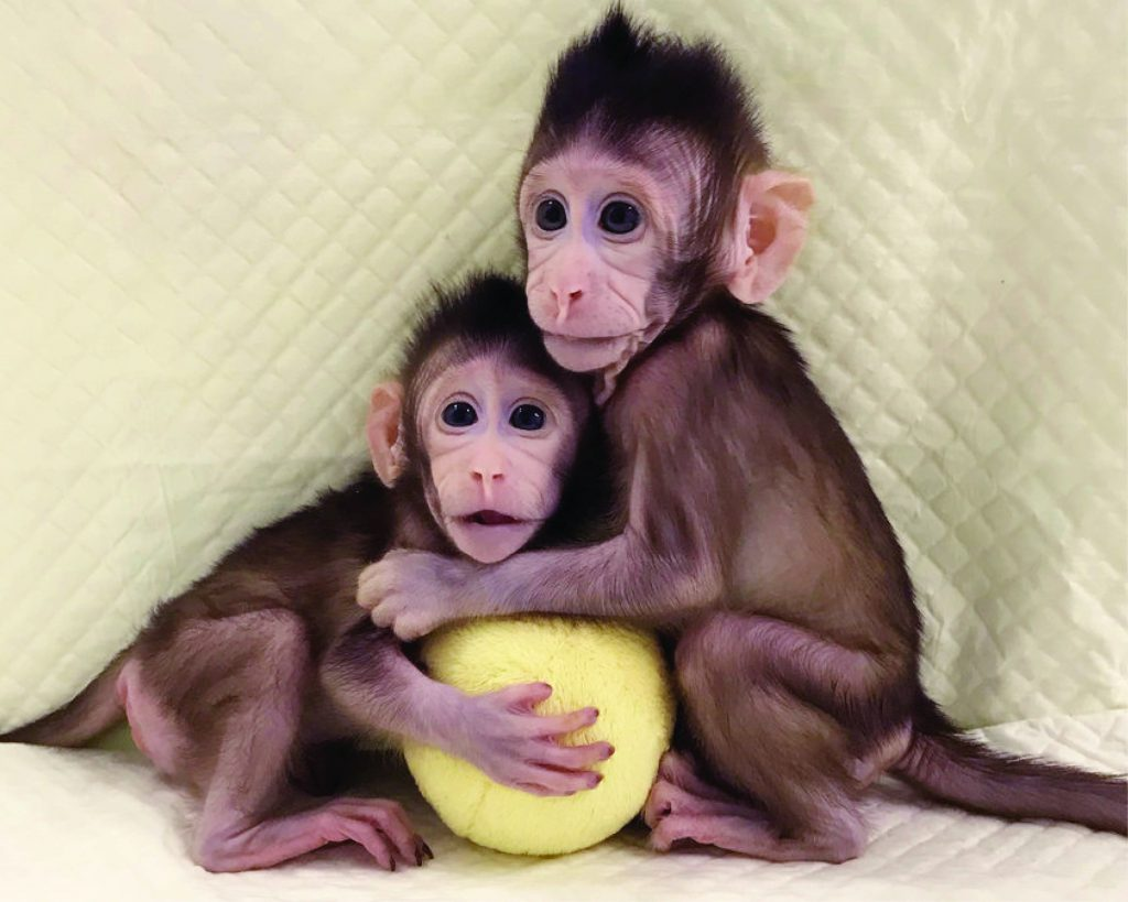 Chinese scientists succeed in cloning monkeys for the first time