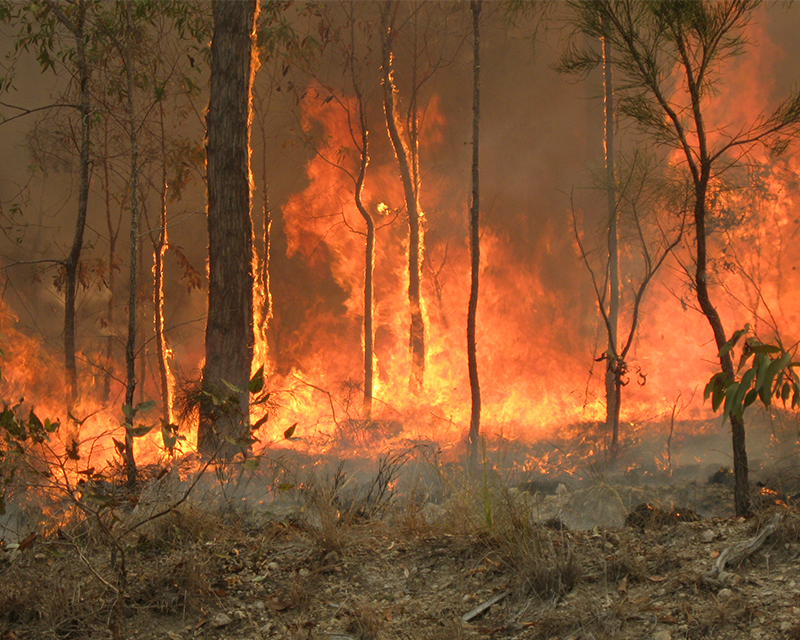 Climate change causes destructive Australian wildfires
