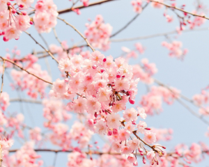 Places to visit in Korea during spring